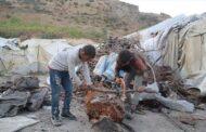 بأعوامه الـ13.. طفل سوري يعول أسرته من جمع الحطب (قصة إنسانية)